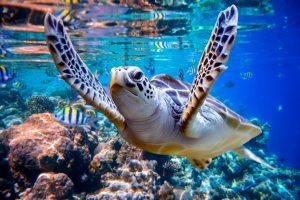 Schildkröte malediven tauchen