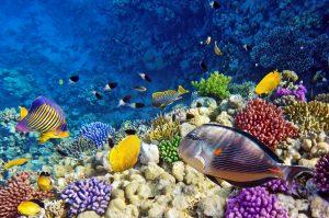 Rotes Meer Ägypten Korallen